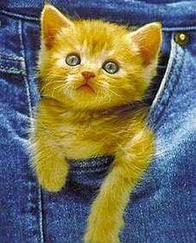 En liten katt i fickan
